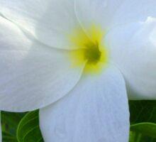 White Yellow Center Flower Reflection Duvet Sticker