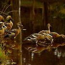 Duck Pond by Antonia  Valentine