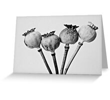 Poppy pods Greeting Card
