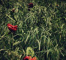 In Flanders Fields by Nikki Smith