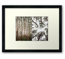 Olinda Framed Print