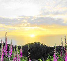 Foxglove sea sunset by Julielorraine