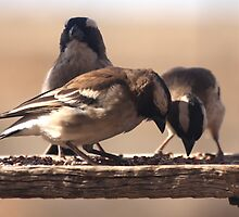 Do you think we can trust this? (Mossies / Sparrows) by Qnita