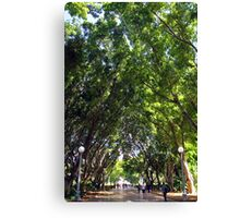 Tree Arch at Hyde Park Canvas Print