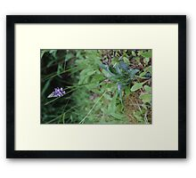 Orchid Wild Spotted Plant Framed Print