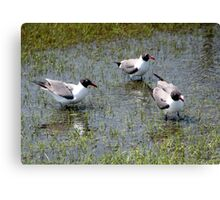 Sea Gulls Waiting Canvas Print