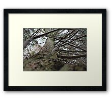Up into the tree Framed Print