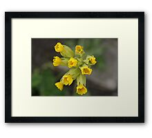 Cowslip Yellow Framed Print