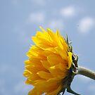 sun is shining by marc melander