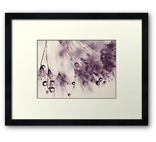 droplets of aubergine Framed Print