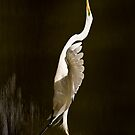 Great Egret Takeoff iPhone by onyonet photo studios