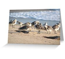 Beach Party. Sebastion inlet. Greeting Card