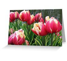 Tulips Dreaming - Keukenhof Gardens Greeting Card