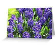 Beautiful Blues - Hyacinths in the Keukenhof Greeting Card