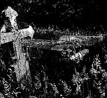 Forgotten Headstones by Darren Burroughs