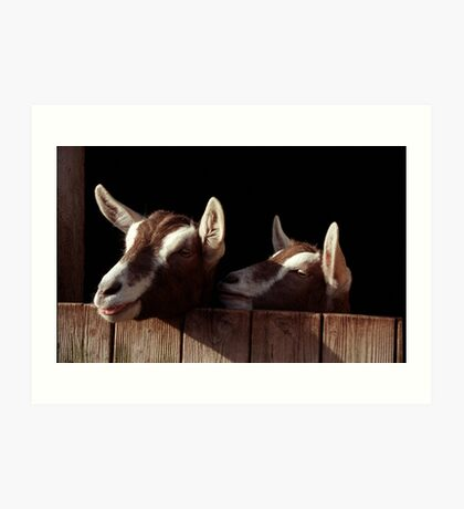 Two Goats looking out of stable. Art Print
