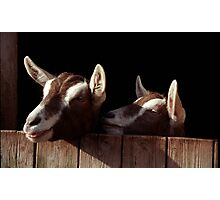 Two Goats looking out of stable. Photographic Print