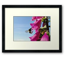 The Foxglove Forager Framed Print