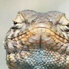 Blue splotch lizard by thedinosaurman