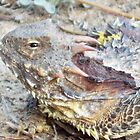 Horned lizard by thedinosaurman