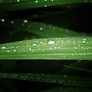 Rain Drops by TheCroc1979