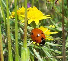 Lady Bug by thedinosaurman