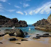 Pelican paradise ~ Seal Rocks, NSW by Rosalie Dale