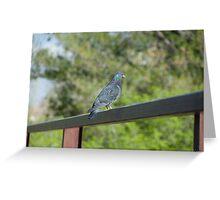 Bird sitting on railing Greeting Card