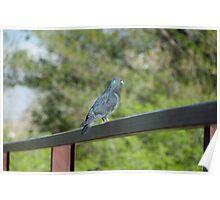 Bird sitting on railing Poster