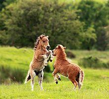 Playfull Ponies by Grant Glendinning