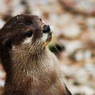 Oriental Short-clawed Otter by TheCroc1979