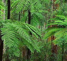 In the Dandenong Ranges. by Bette Devine