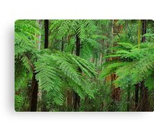 In the Dandenong Ranges Canvas Print