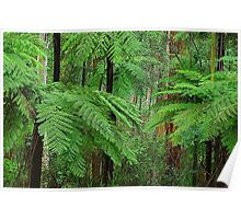 In the Dandenong Ranges Poster