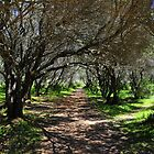 Shaded Path by Mers Duran