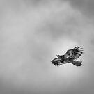 Juvenile American Bald Eagle 2015-6 by Thomas Young