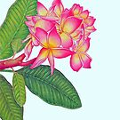 Frangipani Watercolour by joeyartist