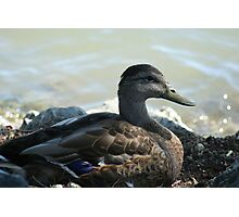 Not the average duck Photographic Print