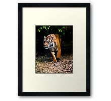 Emerging from the shadows Framed Print