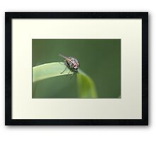 Perched fly Framed Print