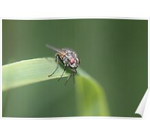 Perched fly Poster