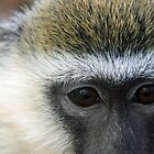 Monkey by DiverDeb
