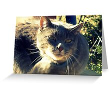 This is Bear... Greeting Card