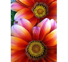 Day bloomers Photographic Print
