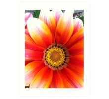 Peach petals Art Print