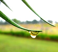 Raindrop - St Mar's Towers Retreat Centre NSW by OzNatureshots