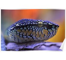 Waglers Viper Poster