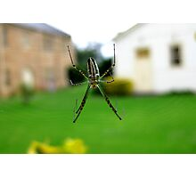 Spider - St Mary's Towers Retreat Centre NSW Photographic Print