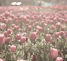 Field of Tulips  by Michelle Lia