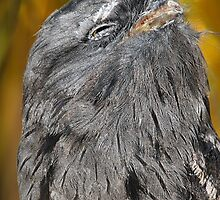 Tawny Frogmouth Bliss by Carole-Anne